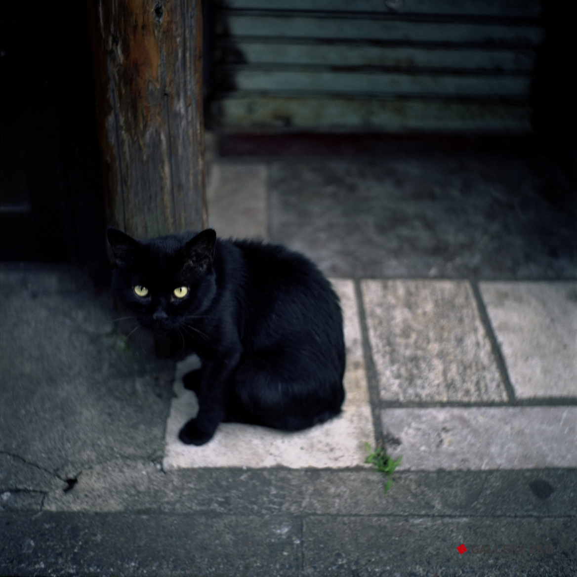No.135 - 'Black cat on the Golden Gai' 2007 Camera: Seagull 4A-103