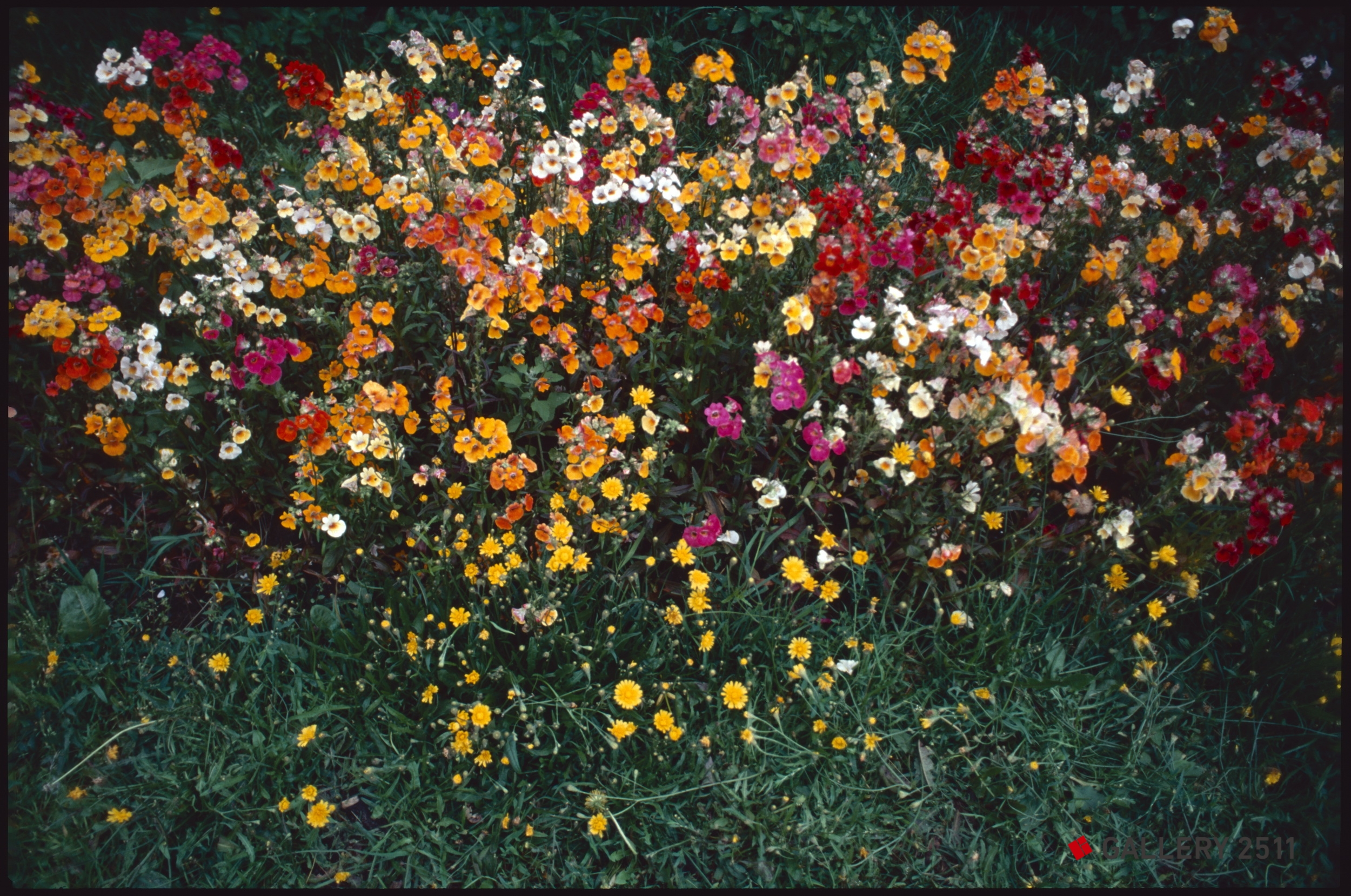 a feast of flowers