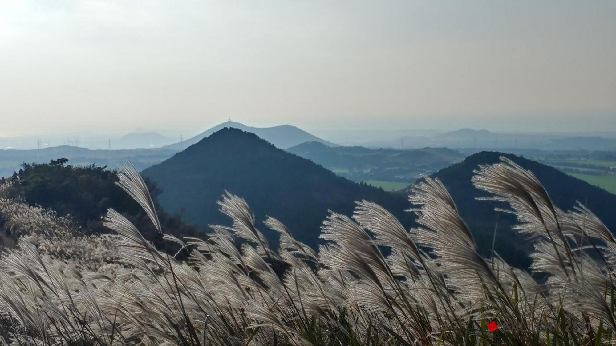 silver grass snd oreum Volcanic Cone