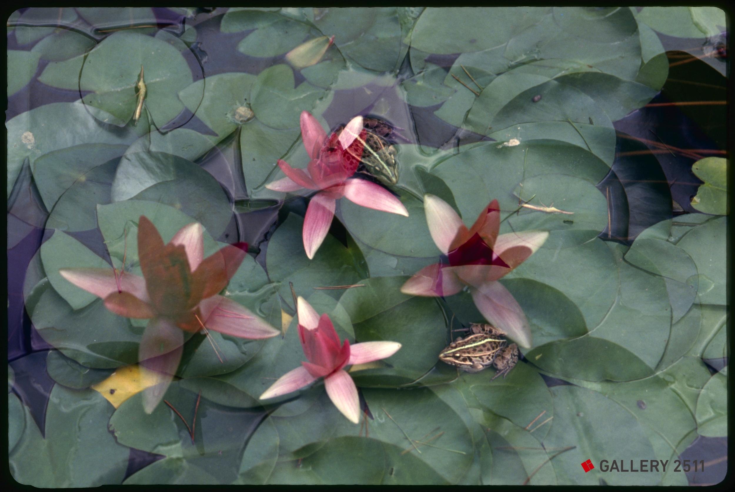 Frog hide-and-seek